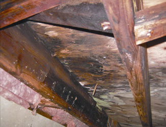 mold and rot in a Price crawl space