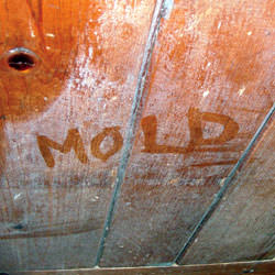 Wood in Saint George that's showing signs of cosmetically damaging mold